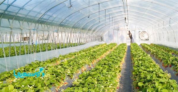 پرداخت بالغ بر 31هزار میلیاردریال تسهیلات گلخانه ای توسط بانک کشاورزی